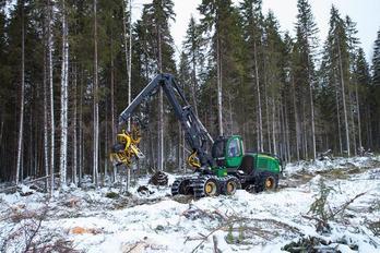 Заготовка древесины - фото 1
