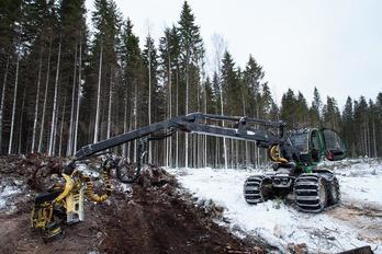 Заготовка древесины - фото 2