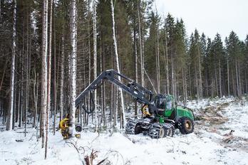 Заготовка древесины - фото 4