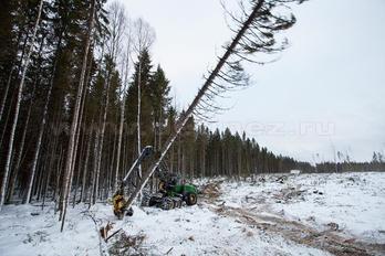 Заготовка древесины - фото 5