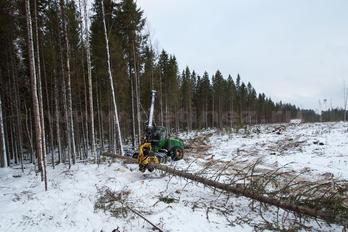 Заготовка древесины - фото 6