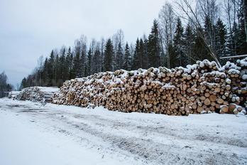 Заготовка древесины - фото 8