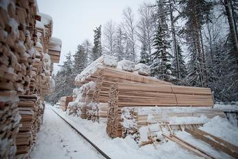 Заготовка древесины - фото 15